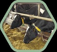 Сопутствующая продукция для молочного животноводства